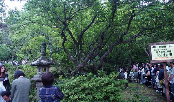横浜の三渓園_画像27