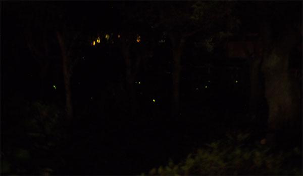 横浜の三渓園_画像36